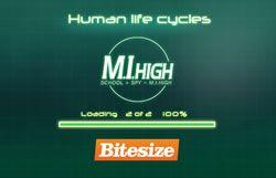 life-cycle-human