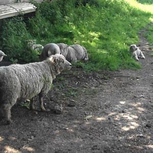 grimsbury-farm